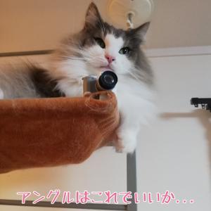 そのカメラ可愛すぎる!?猫が愛してやまないカメラがこれだ!