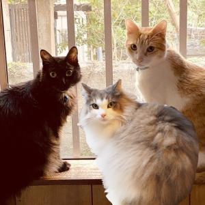 猫友コラボすぺしゃる