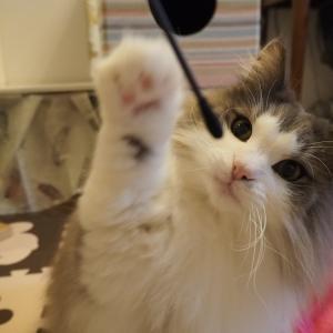 小さい〇〇が一番好きな猫