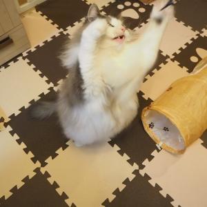 猫が釣れる釣り竿。新しいおもちゃで遊ぼう