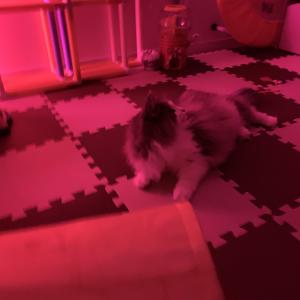 楽しい電球の選び方。猫も子供も喜ぶカラフル照明