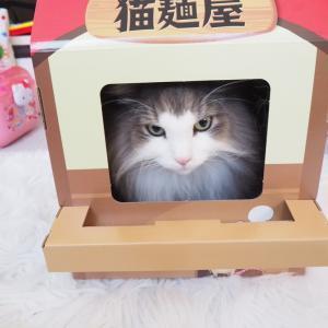 激安な猫用おすすめハウス!はラーメン屋さん!?(というか段ボール)