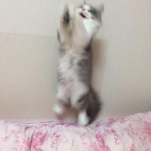 筒状のアイテムで、猫のおしゃれな写真を撮影したい。