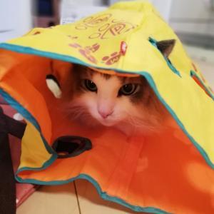 猫はなぜビニール袋が好きなのか。
