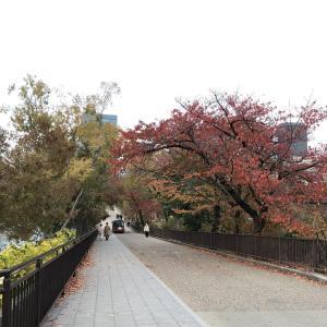 紅葉の季節に取り乱す