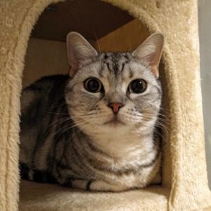 明けましておめでとうございます!...『猫ストーリーは突然に』