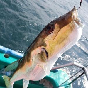 上総湊(とう市丸)真鯛釣り