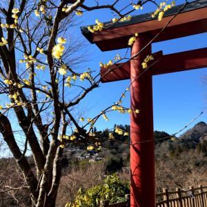御岳山〜日の出山そして吉野梅郷へ ①