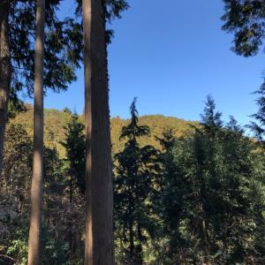 御岳山〜日の出山そして吉野梅郷へ ④