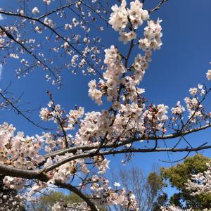 桜見ながら、、、