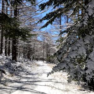 再び雪の西岳へ②