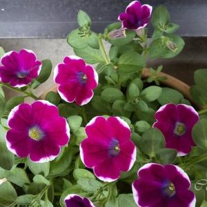 お花の育て方、まだまだ勉強中