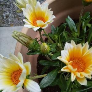咲かなくなったお花について相談してみました