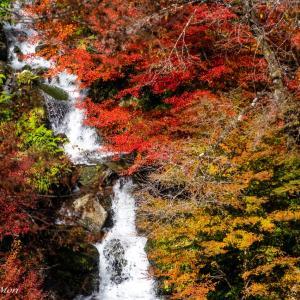 白水の滝(今シーズン2回目)
