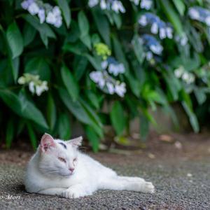 住吉の紫陽花