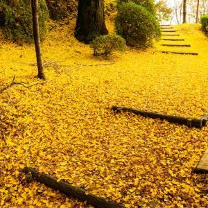 秋の菊池公園
