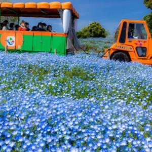 ネモフィラの丘(大分農業文化公園)