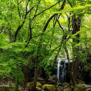 新緑のマゼノ渓谷