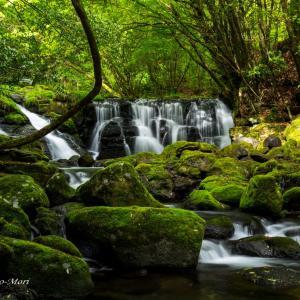 楮畑川の滝