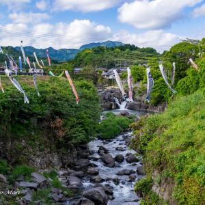 迫間川の鯉のぼり