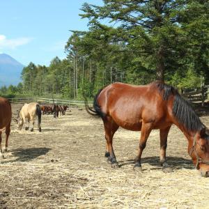 開田高原そば祭りに参戦!! そして約160頭しか存在しない日本在来種「木曽馬」に出会う!!