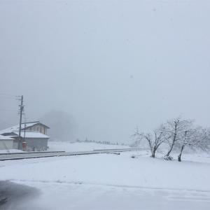 【東京からの松本移住レポート2020.03】 稀にみる暖冬を越えて