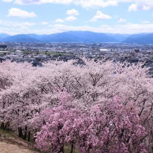 南松本の桜の名所、弘法山を散策する2020