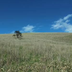 続!車山高原は初心者ハイキングにピッタリだったよ!