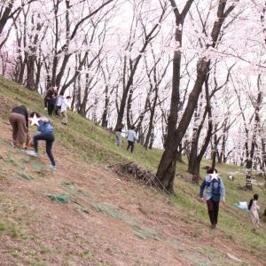 春の弘法山へ満開の桜を見に行こう!