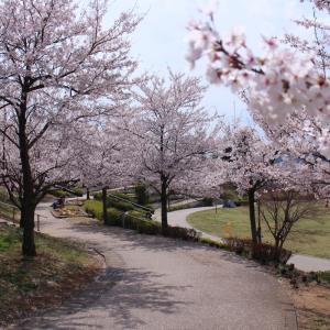 桜巡り -長野市城山公園-