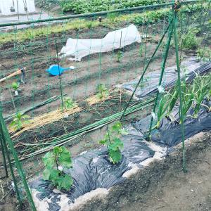 【市民農園で野菜作り!】5月レポート!植え付けラッシュ!