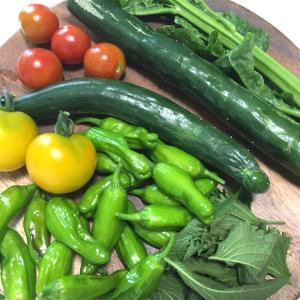 【市民農園で野菜作り!】7月レポート!キュウリの苦戦と夏野菜の収獲