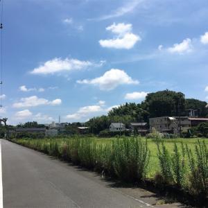 ささっと神奈川県へ帰省してきた(7月中旬)