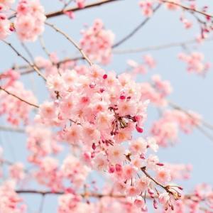 【渕上真希のカラー講座】ピンク色の効果と種類、ご存知ですか😊❓