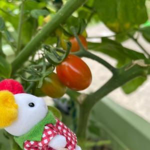 トマトとクリームネコさんのはなし。