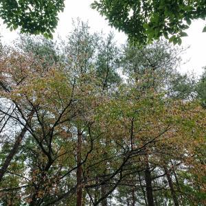 宝石のような紅葉と落ち葉の散歩道