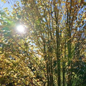 色づく山と秋の味覚の限定品