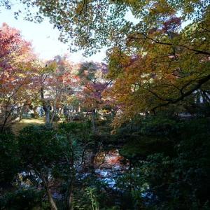 京都の紅葉(圓光寺)