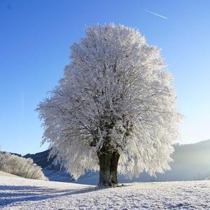急に季節が進んで、冬支度が間に合ってませんっ!