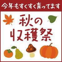 楽天ふるさと納税 秋の収穫祭
