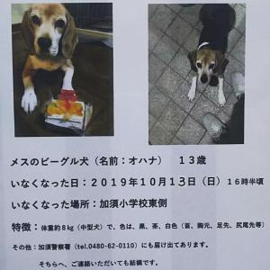 迷子犬、捜索のお願い!