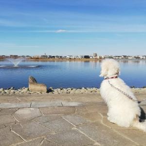 噴水を見る犬!