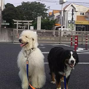 埼玉通信!0612(土)晴れ