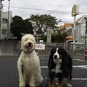 埼玉通信!1022(金)曇り