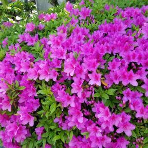 綺麗なお花で癒されてます。。