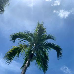 夏休みはグアムへキャンプギアを探しに行ってきました!