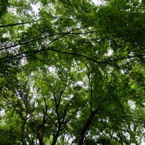 WOOVE PROJECT / 荒幡富士市民の森