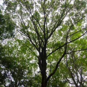 林点描、エスカレーターは真ん中に立つのがいいらしい