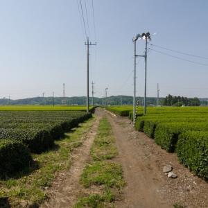 武蔵野点描、気候非常事態宣言は必要か