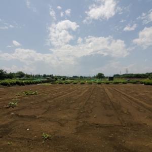 武蔵野点描、畑と沖縄のこと